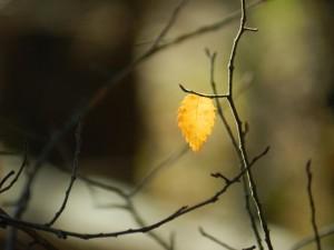 Leaf on a branch