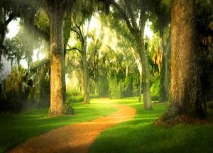 Bok Sanctuary Path